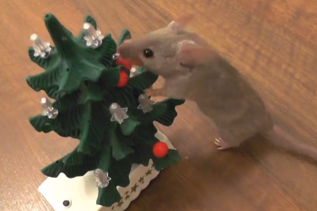 Mouse Decorates A Christmas Tree