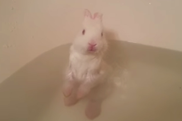 Nawww! Baby Bunny Enjoys First Bath
