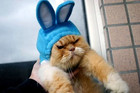 20 Purrfect Halloween Costumes For Cats
