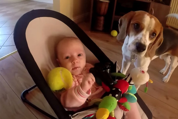 So Cute! Dog Apologises For Stealing Baby Girl's Toy