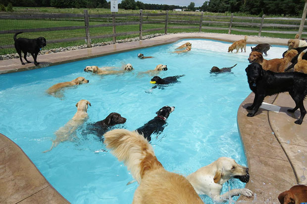 The Best 'Doggy Daycare' In The World