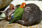 The Cutest Animal Cuddles Of All Time