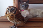 What A Hoot! Adorable Cat and Owl Are Best Friends
