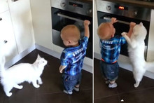 Heroic Cat Prevents Toddler From Touching Hot Stove