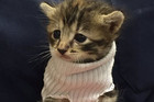 Kitten rescued from Hurricane Matthew gets a new home