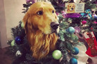 11 Pets who are definately in the festive spirit