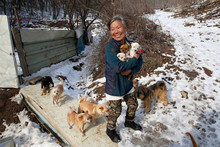 Korean woman adopts 200 dogs to save them from being killed for food