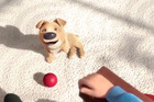 This cartoon about a boy and his dog will bring tears to your eyes!