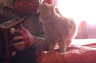 Watch this CUTE CAT fall in love with owner as he plays the accordion