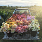 A day in the life of a florist
